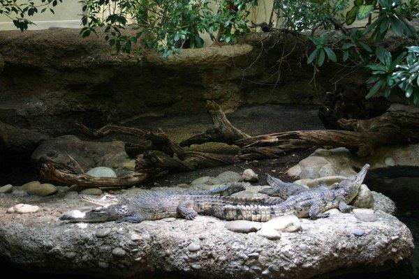 Zoo de Bâle (Suisse)
