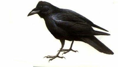 Les corbeaux (L)