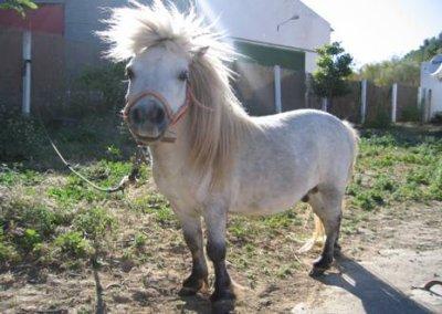 poney fou