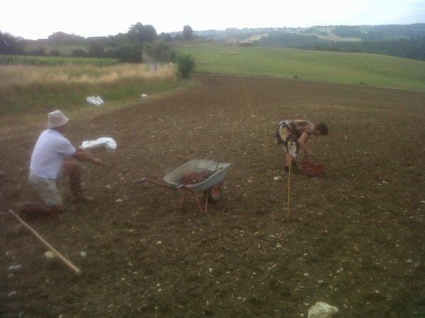 plantation de vignes 2014