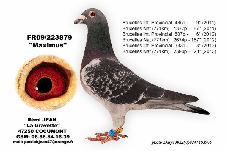 Vente 1: voyageur 470096.08 (10) Maximus x Fille de la Sénicourt-Robert Ben, le SEUL fils de Maximus ENCHERES TERMINEES