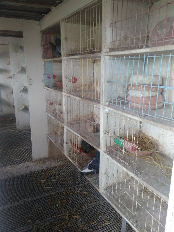 Le pigeonnier est désormais bien vide depuis quelques mois...