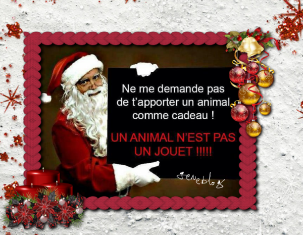 ♥ LES ANIMAUX NE SONT PAS DES JOUETS ♥ BONNE JOURNEE A TOUS ♥2016♥