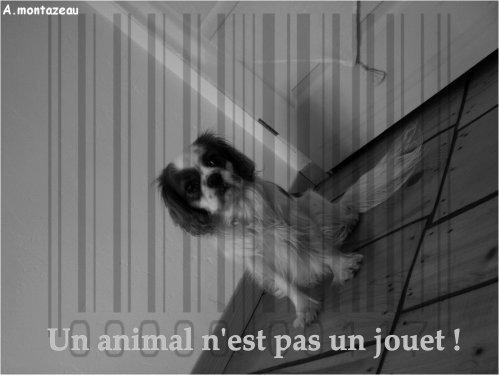 UN ANIMAL N'EST PAS UN JOUET