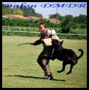 Photo de baloudumontsdesrotts