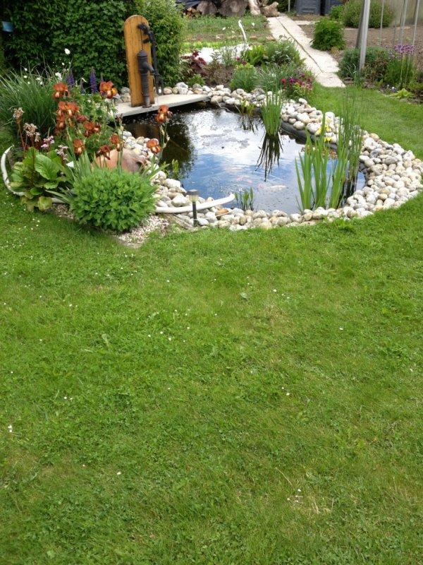 Nouvelle photo de mon bassin en floraison