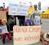 Action anti-cirque, à Crozon (29)