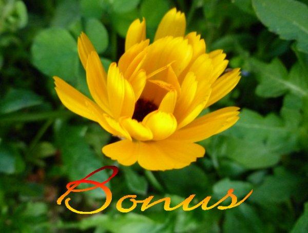 ***Bonus de Souffrance-Renaissance***