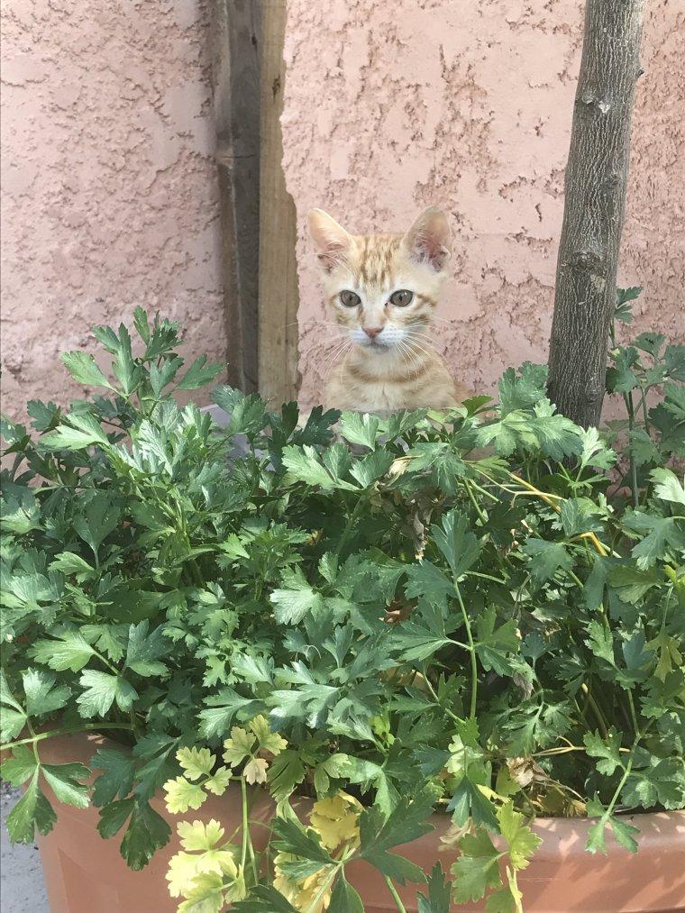 mon petit chat..