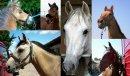 Photo de horses-reality