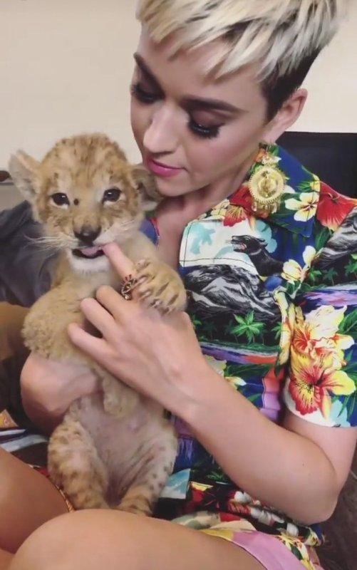 Katy Perry - Fondation Black Jaguar-White Tiger - Mexico 03/05/2018