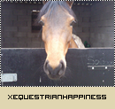 Photo de xEquestrianHappiness