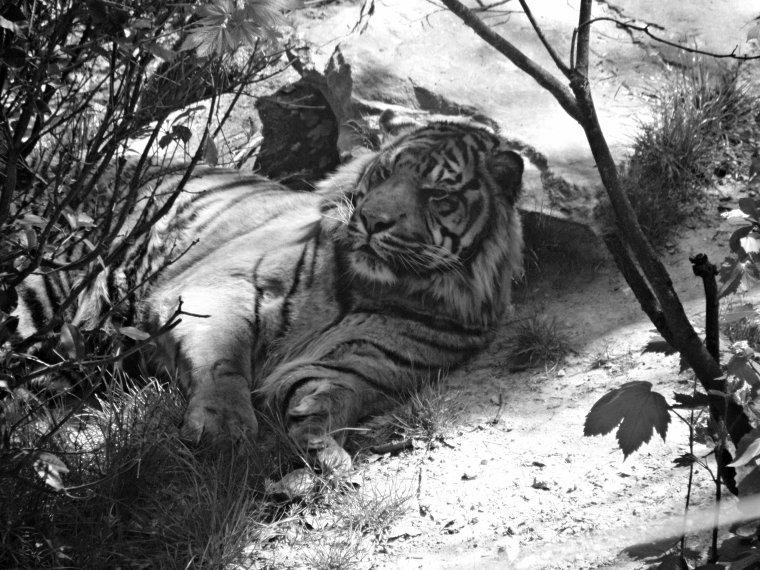 Série Zoo de Beauval 2