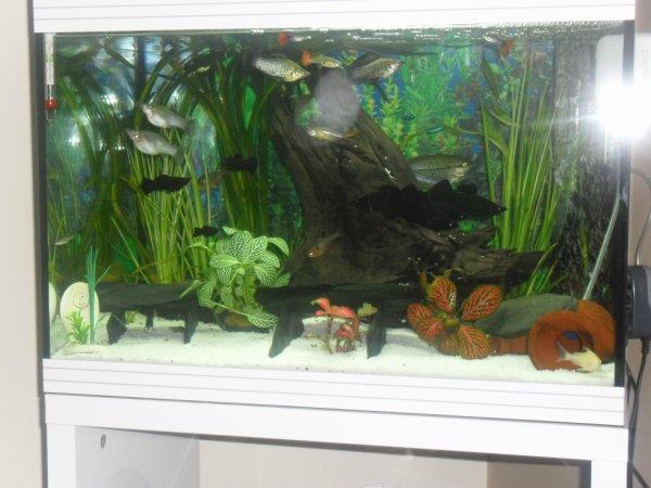 mon nv aquarium