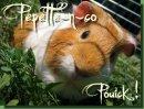 Photo de Pepette-n-co