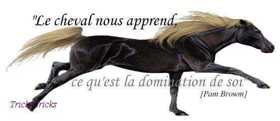¤ Le cheval est à l'Homme, ce que sont les ailes à l'oiseau... ¤