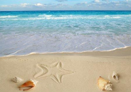 summer paradise (L)