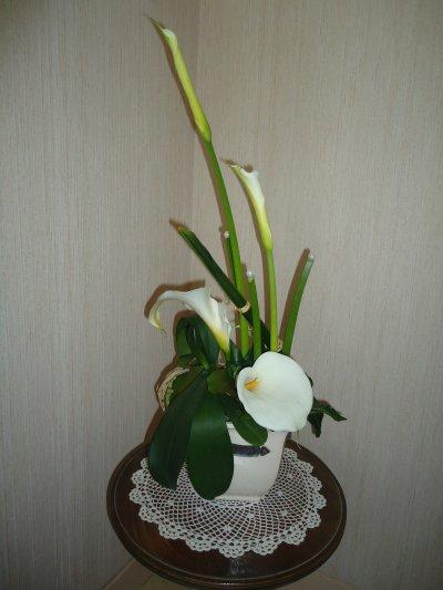 Alliance entre les Arums du Jardin et l'Orchidée du Salon