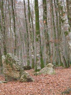 La Forêt de FOUGERES va prendre ses couleurs d'Automne
