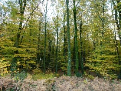 En Forêt de Fougères, ma balade de dimanche dernier !