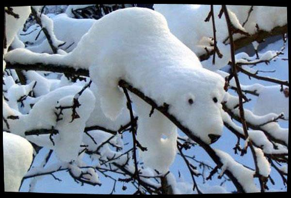 La neige et ses surprises ....