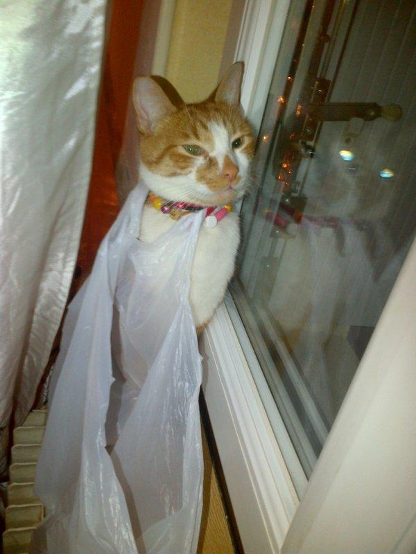 mon chats tekila
