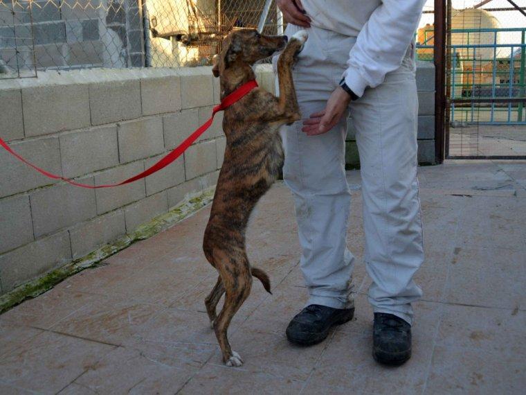 Scooby France ,nos galgos à l'adoption