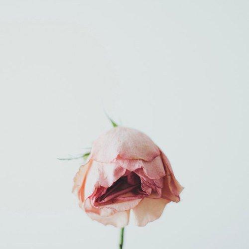 Blog de Dramavore