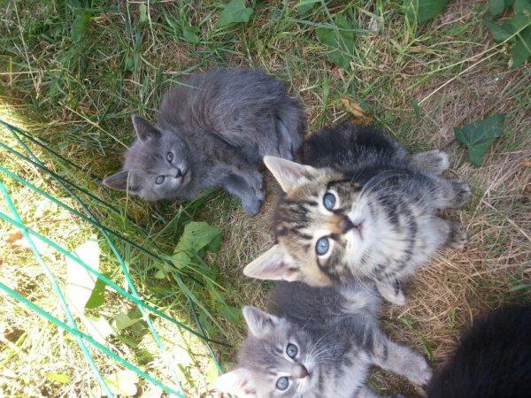 Qui veut un chaton ? ♡