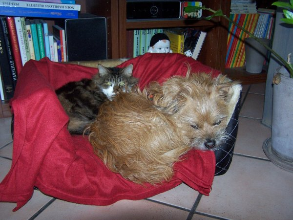 Nouvelle cage des perruches et la photo de Winnie qui ressemble à Joyce de Michette151142