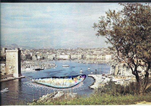 Une sardine  bouche le port de Marseille !!