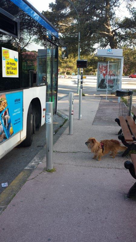 Le fameux bus  24 aujourd'hui !! de la partie de boules   (article précédent)