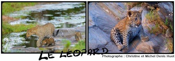 Fiche n°4 : Le léopard ou panthère