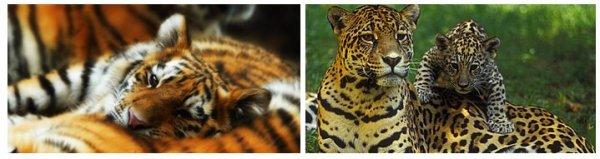 Les cirques : rien de plus abominable pour un animal sauvage !
