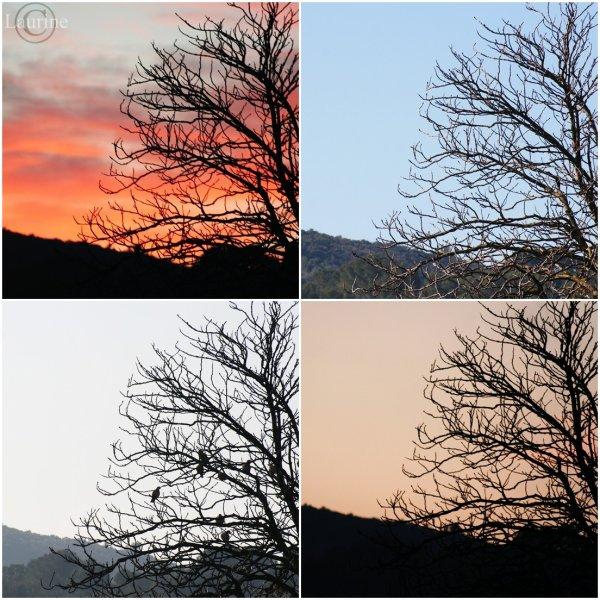 Même/arbre/à/différente/heure