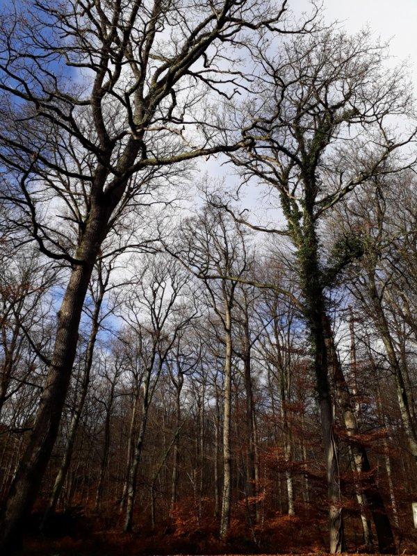 La Forêt.........