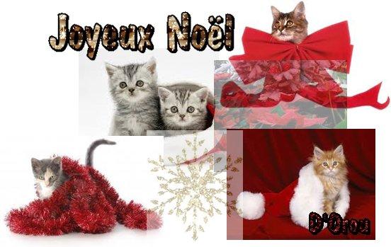 Concours Noël Cats