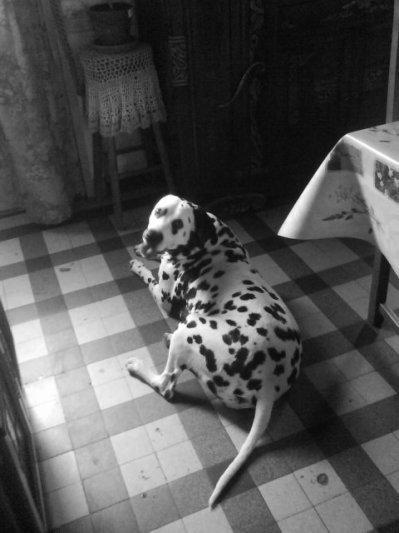 le chien de mon frere tros gentil
