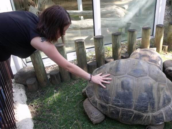 ma passion!  les tortues!!