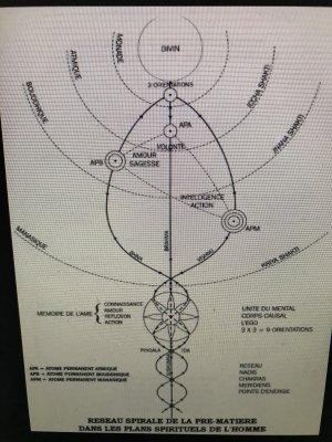 Pentagramme reptilien limbique Ö cortex