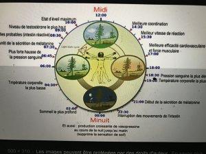 pierre-mary horloge biologique Ä l'ÏÄ