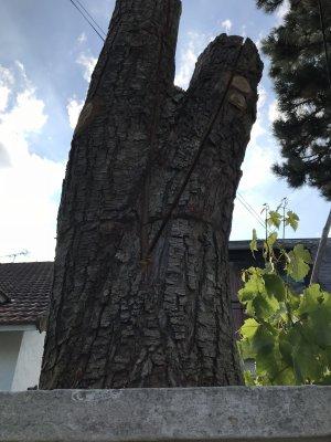 Terre-CieMer Ö gargouille d' agathÖdémon