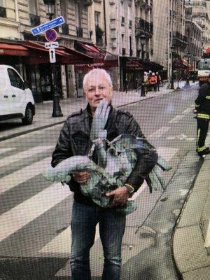 Le coq de Notre Dame de Paris