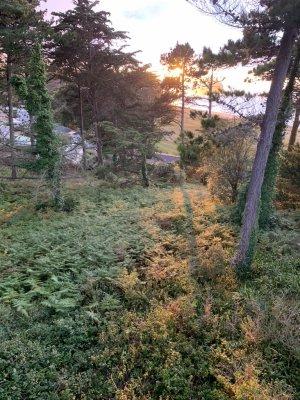couchée soleil sur la cabane des pins Ö arbres du camping des chevrets