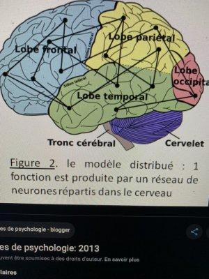 du cerveau reptilien Ö cervelet l'ËÄÜ9 ¾ moelle