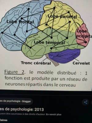 cerveau ö covid-19 cellule gliale 9ËÄÜ cervelet