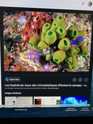 journalÖweb microplastique Bisphénols ËÄÜ9