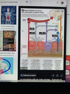 système parasympathique du cerveau intestin