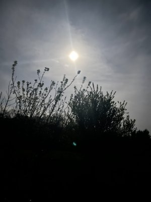drÜÏdË8 ö pleine-lune rose d'avril ö soleil-Lune