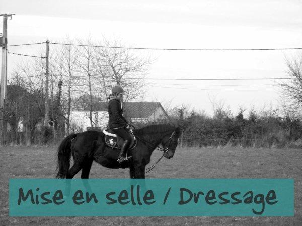 Dressage ♥